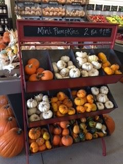Shelves of Mini Pumpkins on Display at Farmer's Market